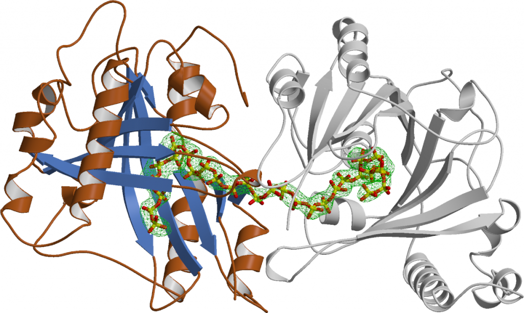 Figure 3. Ribbon diagram of the Vtc4 catalytic polymerase domain. A long phosphate polymer is bound in the active site cleft.